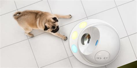 pet gadgets become a smarter pet owner with these gadgets
