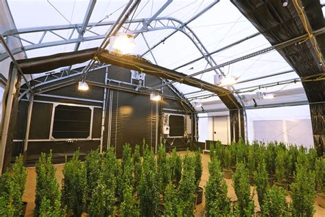 commercial light deprivation greenhouse cannabis greenhouses weatherport