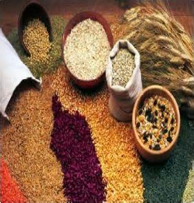 whole grains to eat during pregnancy top 10 foods for pregnancy