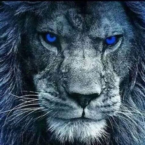 best 25 detroit lions colors ideas on detroit best 25 detroit lions ideas on detroit lions