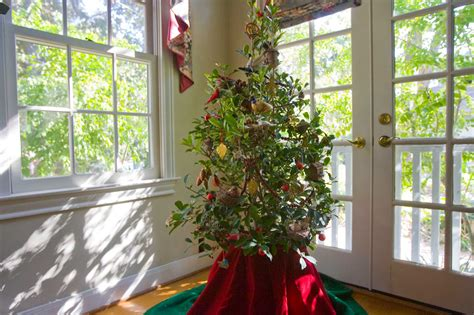 christmas tree options cut or container grown houston