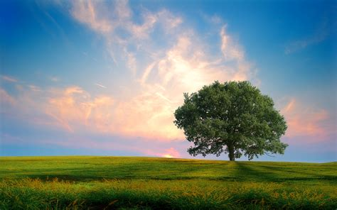 Nature Wallpapers Hd Hdcoolwallpapers by Nature Background Wallpapersafari
