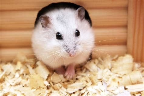 house of pets facts about small mammals as pets petfinder