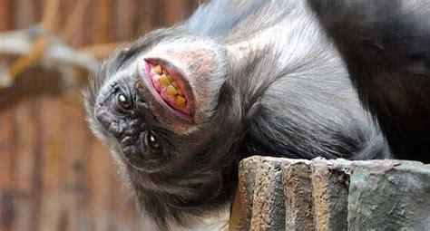 zoologischer garten gutschein zoologischer garten magdeburg gutschein 2 f 252 r 1 coupon