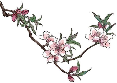 vector cherry blossom ai free vector download 47 712 free