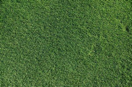 bermuda grass lawn care types planting and maintenance