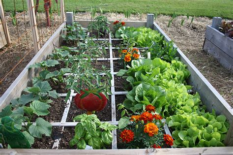 Square Garden by 8 Easy Steps To Square Foot Gardening Garden Starters