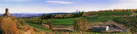christmas tree farms near mt hood oregon willamette valley panorama scholls tree farm mt