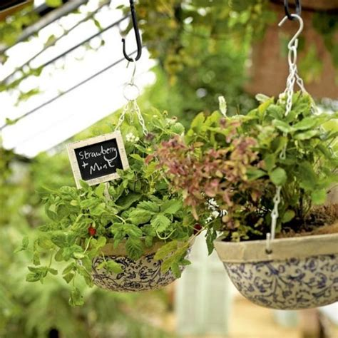 Plantation Herbes Aromatiques Jardiniere by Jardin D Herbes Aromatiques Sur Balcon Plantation Et Soins