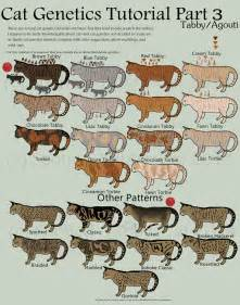 cat color patterns cat genetics tutorial part 3 tabby agouti by spotted
