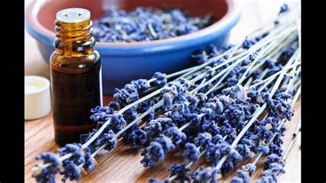 oils that retard unwanted hair lavender tea tree oil for hirsutism induced facial hair