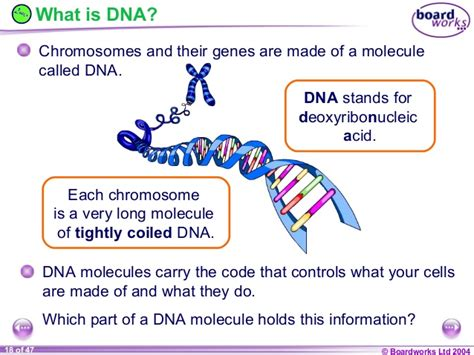 what is a section of a chromosome called ks4 chromosomes genes and dna