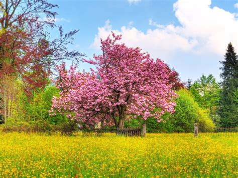 pretty spring pictures beautiful spring wallpapers may 2011 love sepphoras