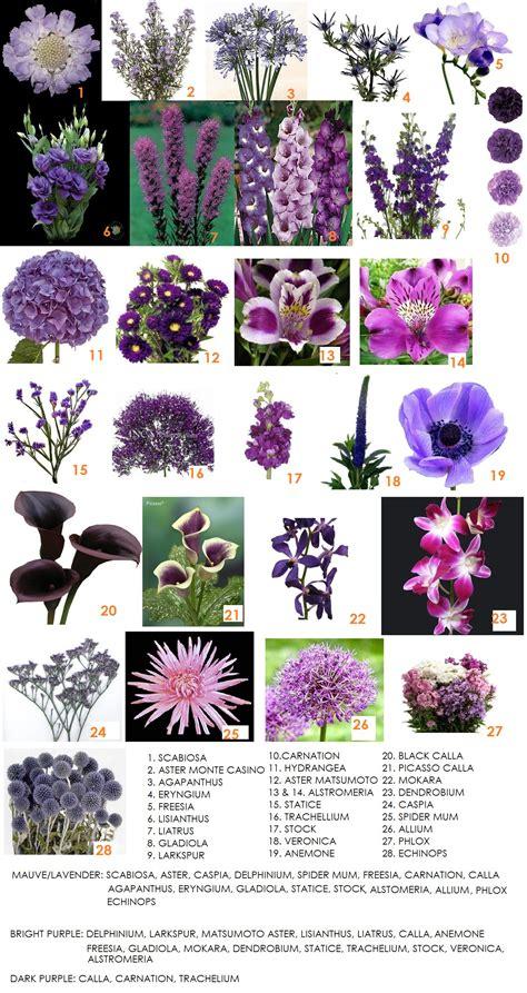 flower information modern petals blog