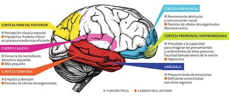 traumas infantiles cambian el cerebro