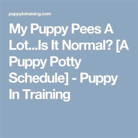 my puppy pees a lot 25 best ideas about puppy schedule on puppy care puppy schedule