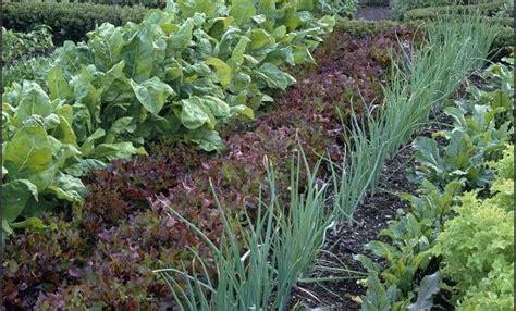 Gardening Tricks Organic Vegetable Gardening Information Tips Tricks And