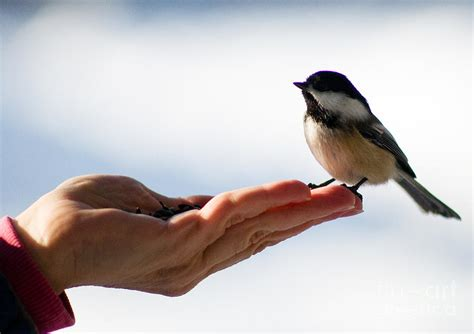 bird in a hand photograph by terry elniski