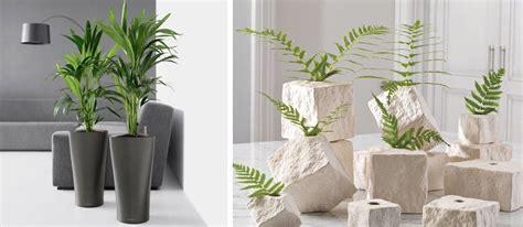 macetas para interiores plantas de interior en decoraci 243 n tipos y consejos para casa