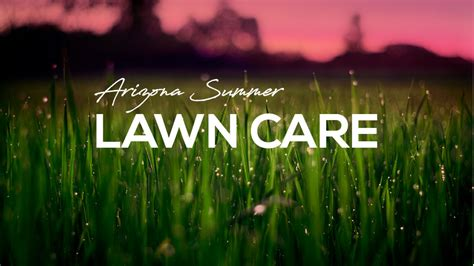 late summer lawn care summer lawn care preparing your yard for summer green