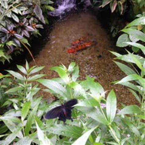 Uf Butterfly Garden by Florida Museum Of History Museums Gainesville
