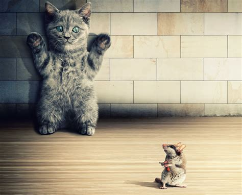 wallpaper chat humour cats rodents mice kittens humor animals situation funny
