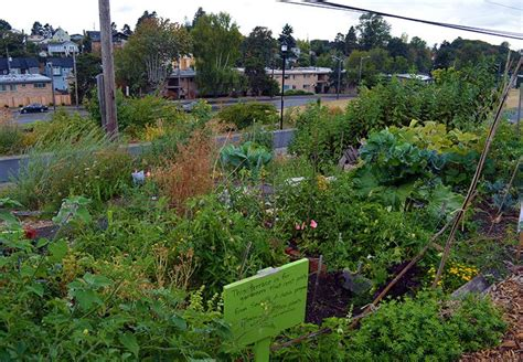 how does an urban food forest work garden living and