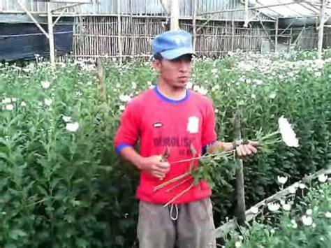upin dan ipin tanam tanam ubi theme song youtube jenis jenis tanaman hiasan doovi