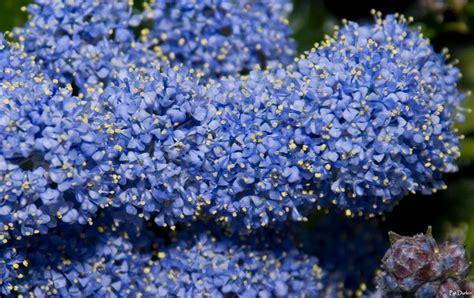 small tiny tiny tiny blue flowers gardenbanter co uk