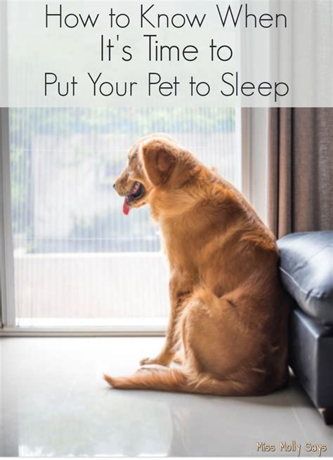 when is it time to put a how to when it s time to put your pet to sleep miss molly says