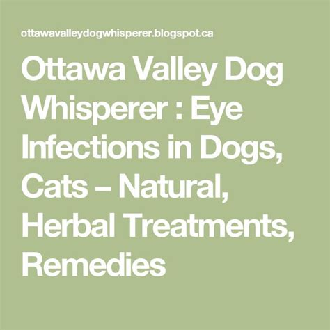 new choices in healing for dogs cats herbs acupressure homeopathy flower essences diets healing energy books ottawa valley whisperer eye infections in dogs cats