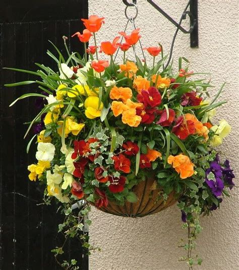 design hanging flower baskets the 25 best hanging basket ideas on pinterest indoor