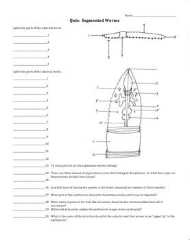 earthworm diagram test earthworm diagram quiz image collections how to guide and refrence