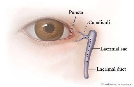 inner tear tear duct anatomy of michigan health system