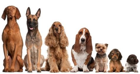 the four types of dogs every business needs how to build the right team to grow your business and a balanced books bryony s every grooming in wollombi nsw pet groomers