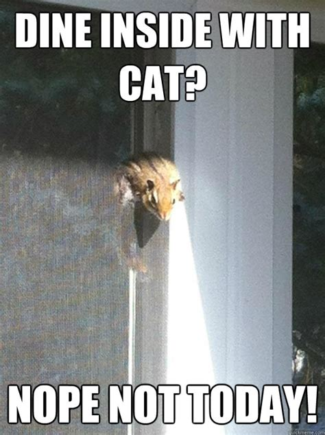 Memes Today - dine inside with cat nope not today desperate chipmunk