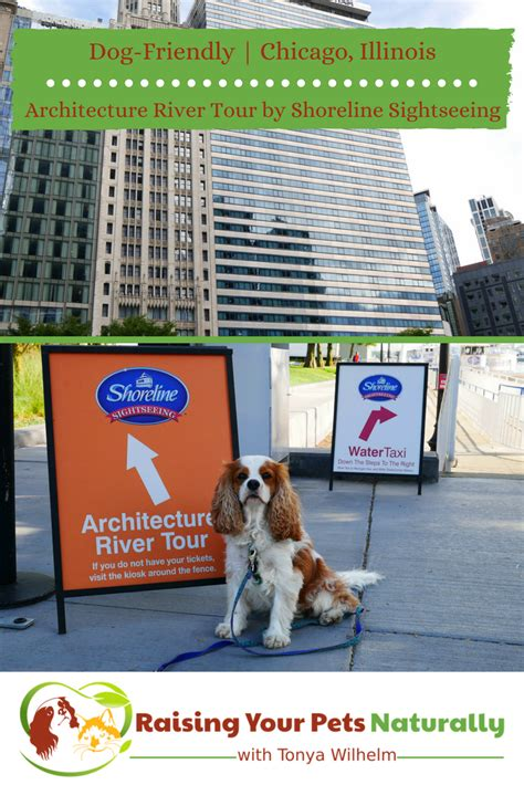 chicago boat tours dogs dog friendly chicago attractions dog friendly boat tours