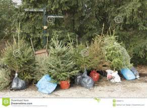 ideas about replanting christmas trees cheap christmas