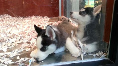 pet store that sells puppies new jersey passes new that requires pet stores to sell only rescue animals bored