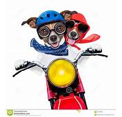 Motocykl Para Psy Obrazy Royalty Free  Obraz 37738929