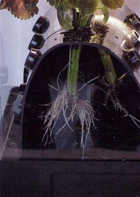 small aeroponics system