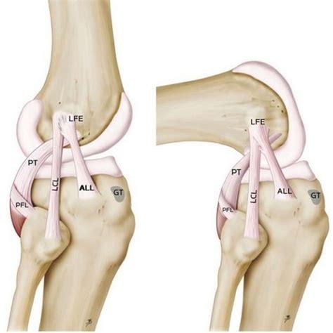 anatomy of the knee howstuffworks