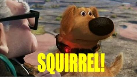 Squirrel Meme - do you remember what you were angry about in 2014