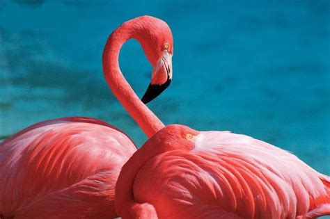 flamingo wallpaper to buy 33 best images about famingos on pinterest personalized