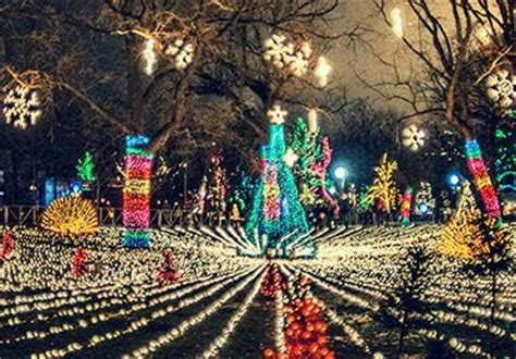 lincoln park zoo lights free family zoo lights at lincoln park zoo chicago
