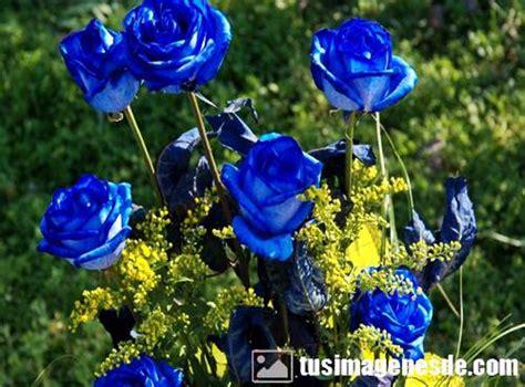 imagenes de rosas verdes y azules im 225 genes de rosas azules im 225 genes