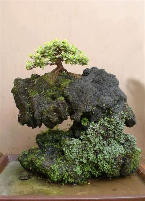indoor bonsai kaufen 254 best riparium aquascaping home garden images on