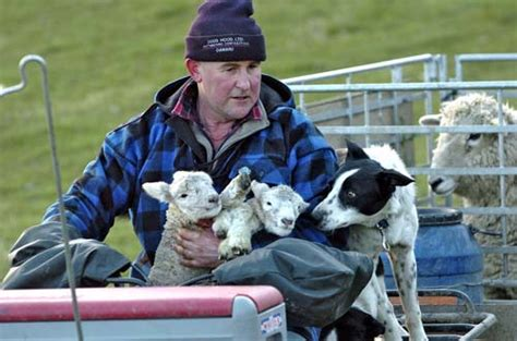 lambs farm puppies with lambs farm dogs te ara encyclopedia of new zealand