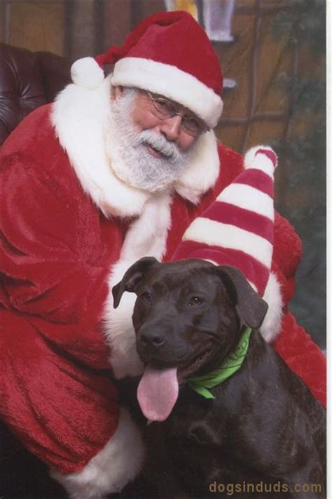 santa pits 1000 images about an animal on