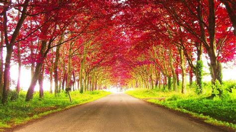 road  red autumn trees  daytime hd nature